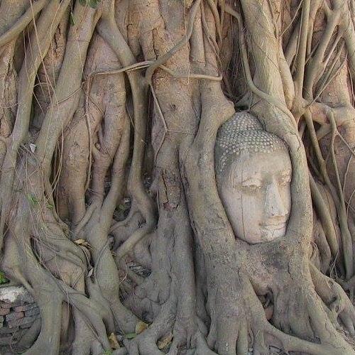 Visiter Ayutthaya depuis Bangkok. La splendeur architecturale de l'ancienne capitale du Siam, Ayutthaya, est toujours visible à travers ses ruines, témoins d'un déclin tout aussi fulgurant que ne fut son développement et sa prospérité passée.