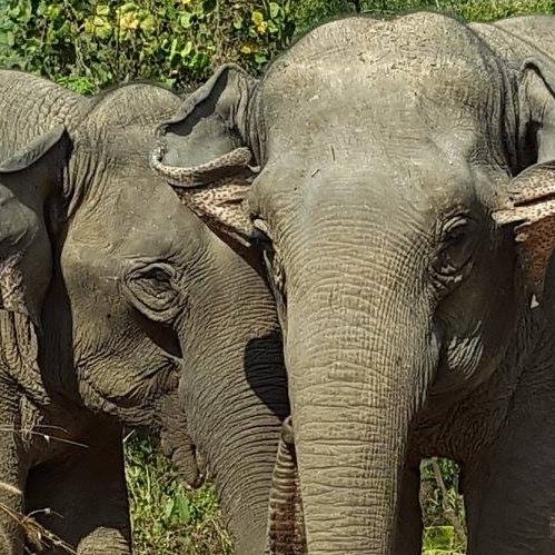 Une Cagnotte Leetchi pour aider Éléphant Steps