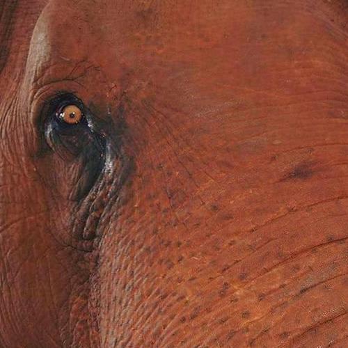 Voir des éléphants heureux au GaneshaPark