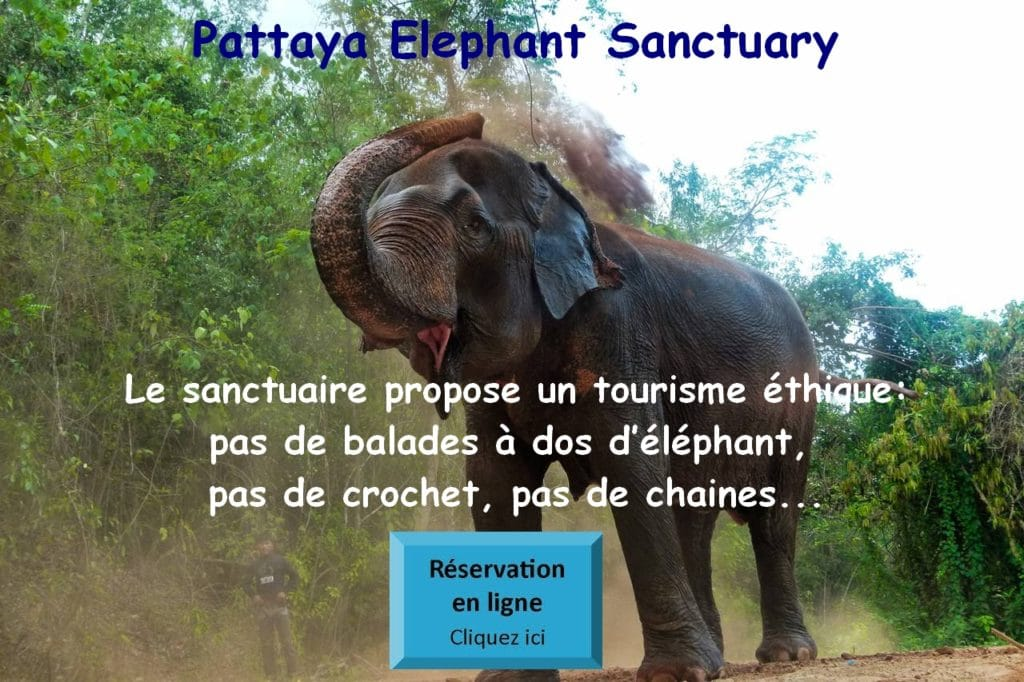 Pattaya Eléphant Sanctuary