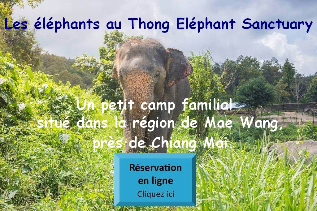 Thong Eléphant Sanctuary Chiang Mai