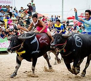 Buffalo Racing Festival 2019 : courses de buffles à Chonburi