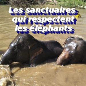 Les sanctuaires qui respectent les éléphants